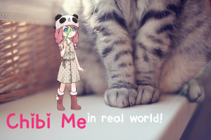 chibimeinrealworldphotos